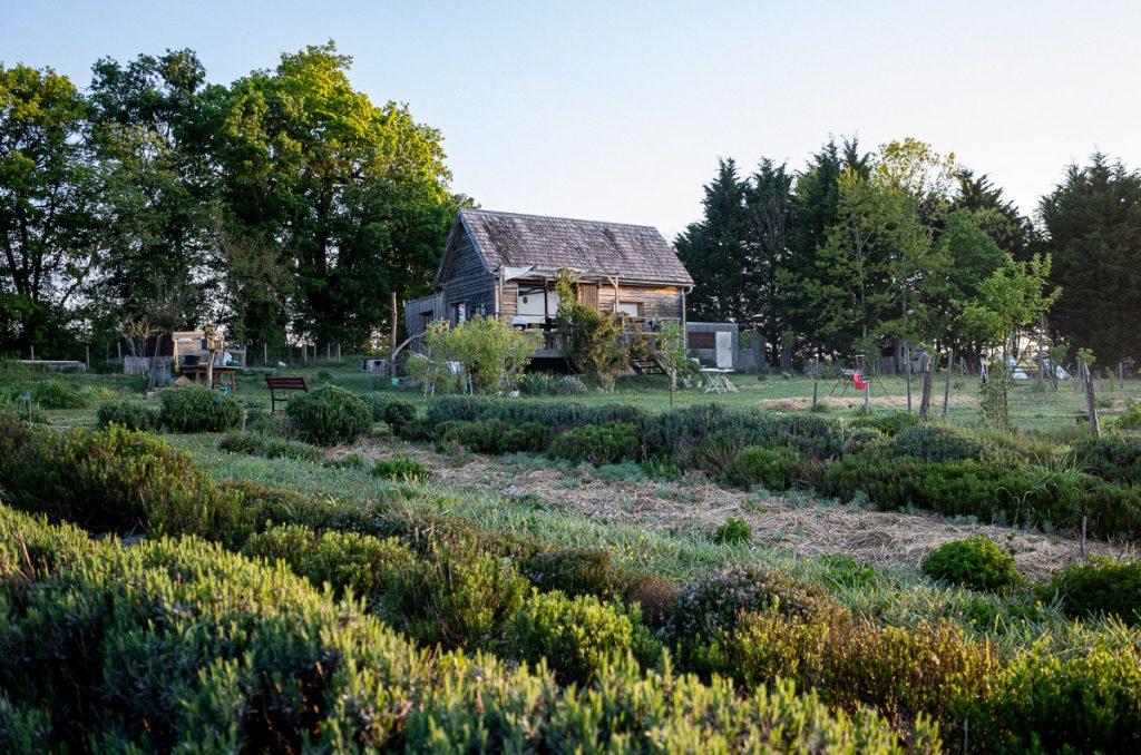Photo de la tiny house de la Cabane à Plantes, dans la brume matinale. Tourraine.
